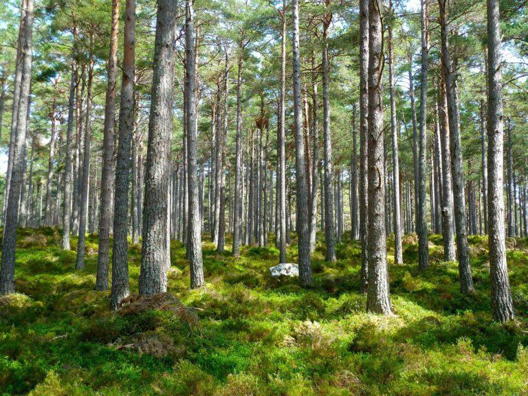Bac Pro Forêt